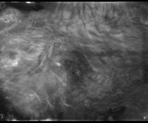 Fragmentos de III - 9, 120 07.05.09-21.07.09, reprodução positiva de negativos radiográficos da série Chernobyl (foto: Cortesia da artista)