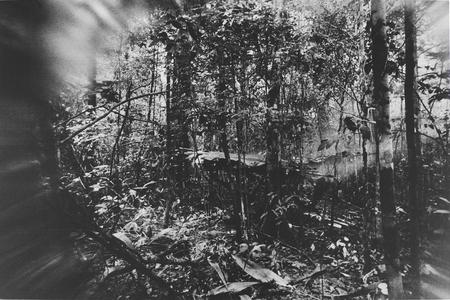 Da série Floresta, 1974