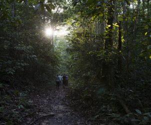 Expedição pela Floresta Amazônica durante a edição de 2016 do programa Labverde, que contou com 18 artistas selecionados (Fotos: Cortesia Marcelo Moscheta)